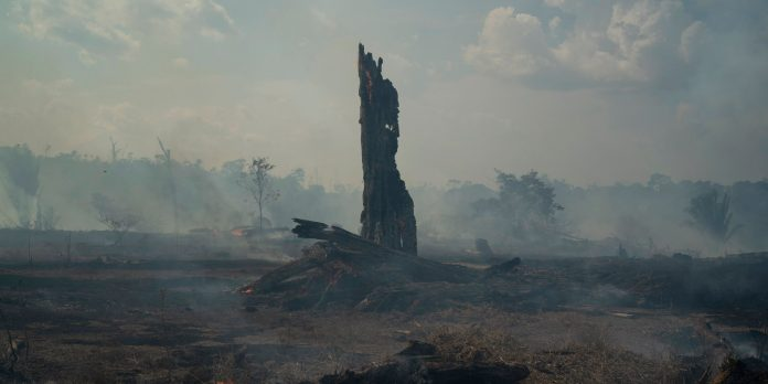 Nearly 2,000 new fires have started in the Amazon in the last 48 hours despite burning ban from government