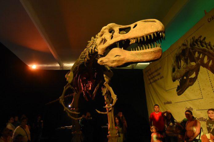 T. Rex skulls had built-in air conditioning – BGR