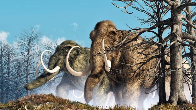 How old? DNA reveals lifespan of mammoth | News – The Times
