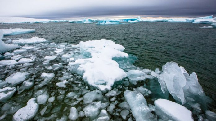 Chlamydia cousin discovered in deep Arctic Ocean – Livescience.com