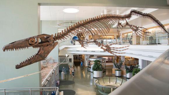 Paleontologist Describes New Genus of Mosasaurs: Gnathomortis   Paleontology – Sci-News.com