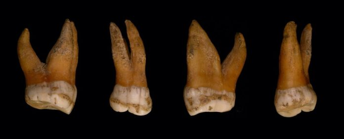 New Study of Neanderthal And Denisovan DNA Reveals a Surprising Link to Men Today – ScienceAlert
